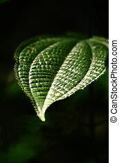 Thorny green leaf - Close up of a thorny green leaf in a...