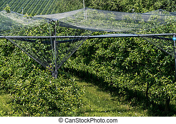 hail nets to protect orchards against hail - about...