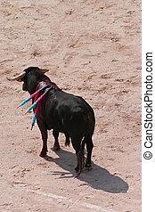 corrida, /, Bullfight