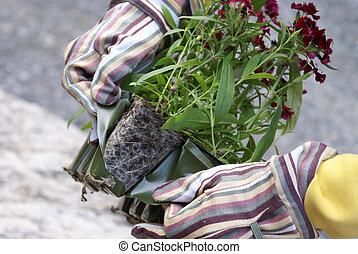 Gardener Gets Flowers