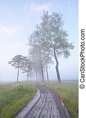 bike road between trees in mist