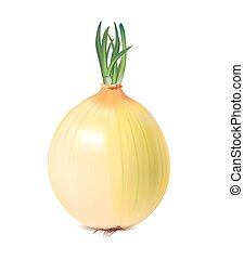 isolated vegetable onion