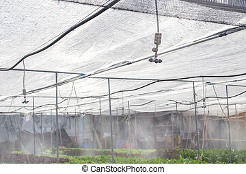 spit watering system in Vegetables hydroponics farm