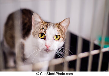 Close up of a little cat in cage - Close up of a little cat...