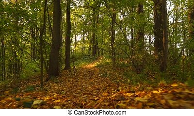 Sunny autumn forest and fallen leaves, front view, smooth...