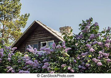 Rural wooden house in the lilacs - Rural wooden house in the...