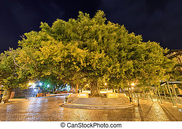 San Juan night tree