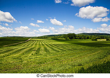 freshly cut hay field