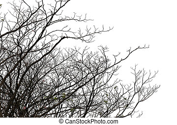 branches of deciduous trees in tropical woodland - branches...