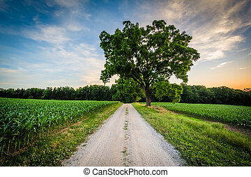 Tree along a dirt road at sunset, near Jefferson in rural York County, Pennsylvania.