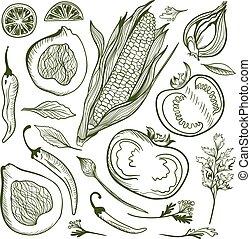 Vector Vegetable Sketch Set