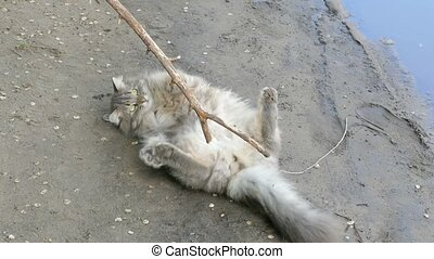 cat lying on the ground, playing with a stick slow motion...