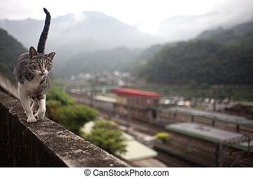 túnel, gato,  hou,  taiwan\'s