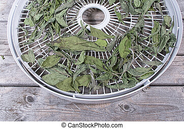 Dried sage leaves on a white food dehydrator tray on a...