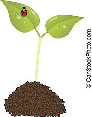 young plant new life concept vector with ladybird