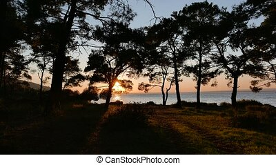 View at the sunset and sea coast through the pine forest. 4k...