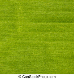 Banana leaves texture - image of Banana leaves background...