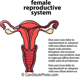 female reproductive system, vector sketch hand-drawn...