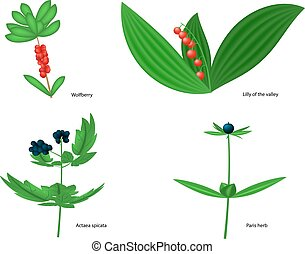 Vector illustration of forest poisonous berries with...