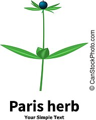 Plant with poisonous berries Paris herb - Vector...
