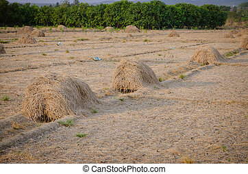 Pile of dry hay on the farm - Pile of dry hay on the...