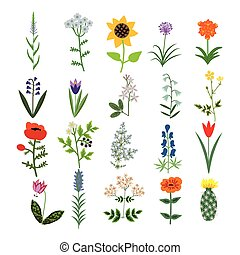 Set of decorative flowers - Set of decorative vector plants