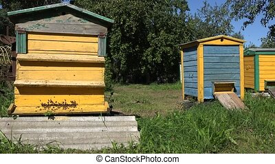Worker bees flying to colorful hives houses in summer fruit...