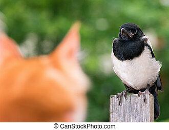 gato, cazado, Un, pájaro,