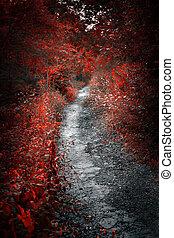 Old path in red forest - Old neglected path in mysterious...