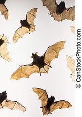 Stuffed animal - bat - close up
