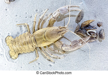 Prehistoric animal - crayfish - detail
