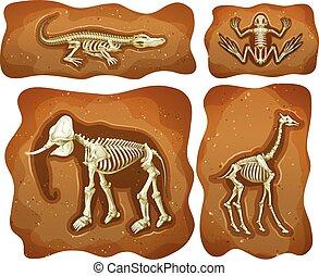 Four different fossils underground illustration