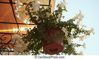 House street flowers in the suspended flowerpot and a sun...