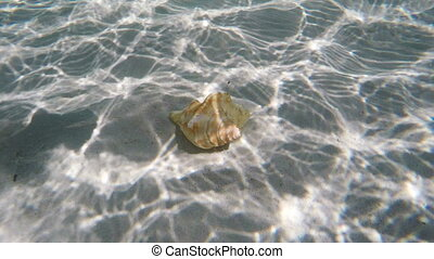 Seashell under water. - Seashell lies under the water on the...