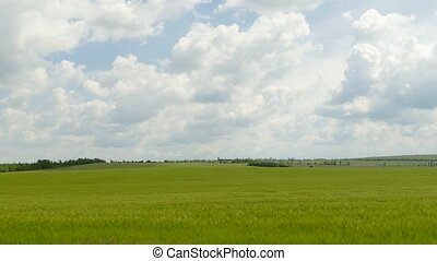 Cumulus Clouds Flying Over Green Field - Majestic fluffy...