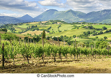 Typical landscape Marche Italy - Image of a typical...