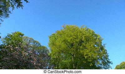 Spring Scene 6