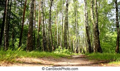bicycle rides through forest - man on a bicycle rides...