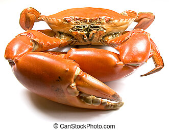 Mud Crab - Cooked Mud Crab Scylla Serrata with focus on the...
