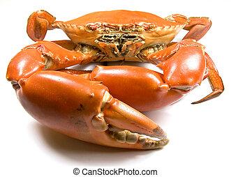 Mud Crab - Cooked Mud Crab (Scylla Serrata) with focus on...