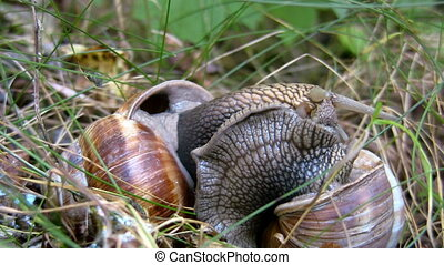 Two snails make contact 2
