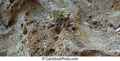 Hermit Crab macro with blur background on sand beach in...