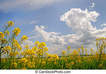 spring field with wild flowers - spring landscape of field...