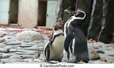 The penguin cleans feathers in a sunny day