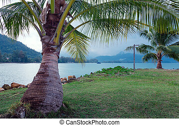Coconut palm on a tropical beach