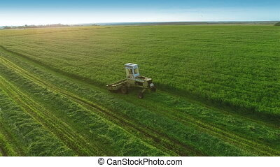 Harvesters Work on Green Field - Aerial shot: Combine...