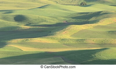Vast Rolling Hills - Large landscape view of the Palouse,...