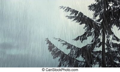 Tree Sways In Wind And Rain