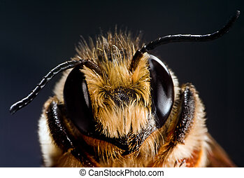 Beeholder - Close-up of a honey bee
