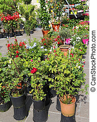 Potted flowers for sale in the market of flowers